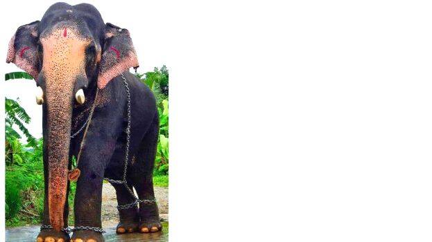 kerala-elephant-census