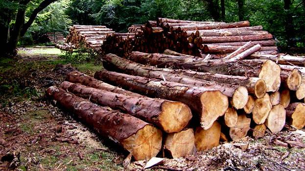 Operation Bagheera: Vigilance dept set to end corruption in forest  department - KERALA - GENERAL   Kerala Kaumudi Online